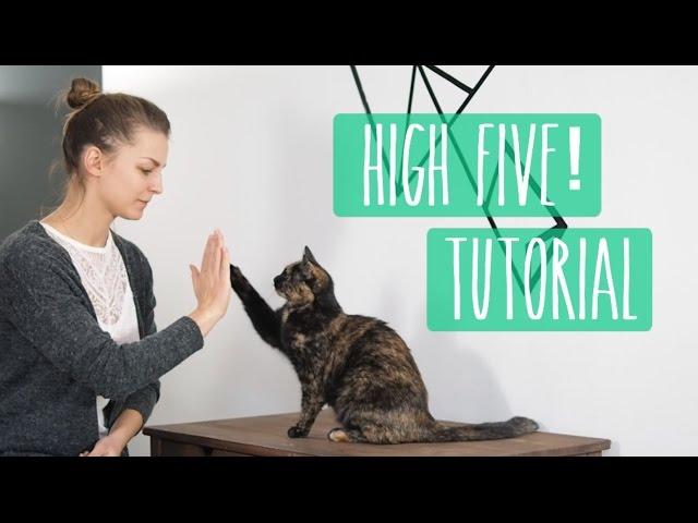 So lernt eure Katze High Five! Katzentrick Tutorial