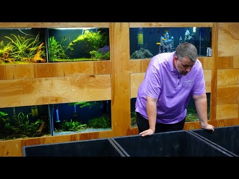 Indoor Ponds Are Here! [Fish Room Vlog]