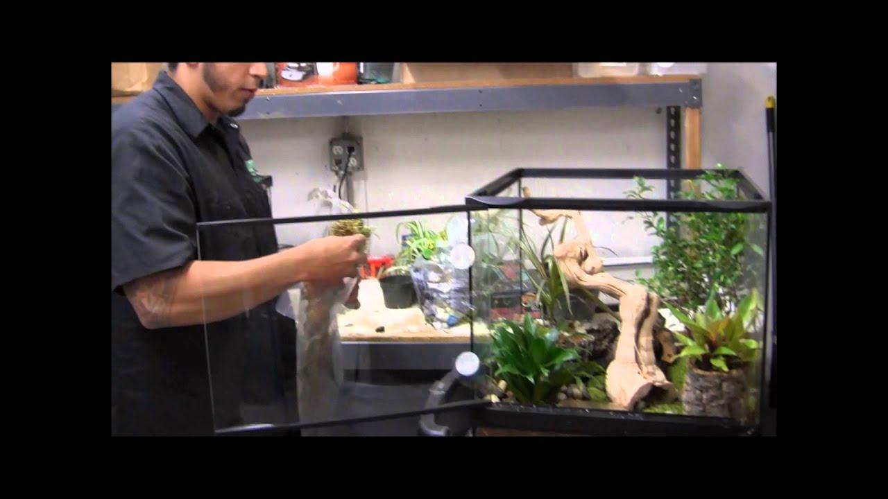 Crocodile skink cage setup - photo#6