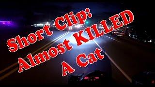 Short Clip: Almost Killed Me a Cat!