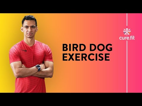 How to do the Bird Dog Exercise Cult.Fit Cues
