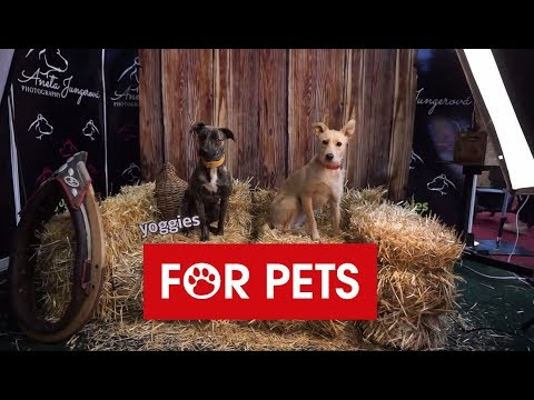 FOR PETS 2019