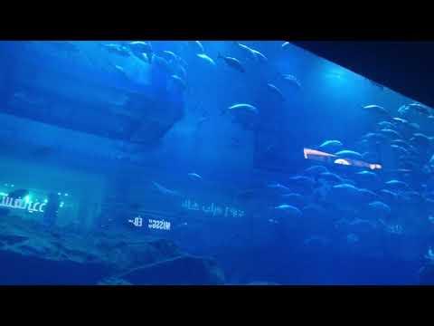 Aquarium inside of  Dubai Mall Dec 2019