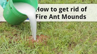 How to Get Rid of Fire Ant Mounds