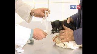 видео 4 октября - Всемирный день животных