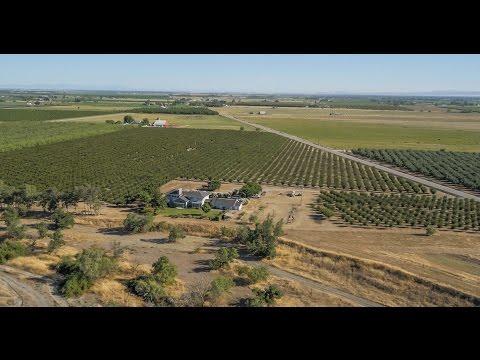 Northern California Farm | Everett Prune Orchard, Glenn County, California