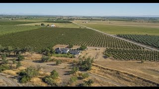 Northern California Farm | Everett Prune Orchard, Glenn County, California