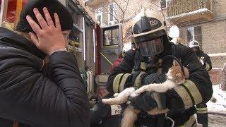Кот воскрес в руках спасшего его пожарного