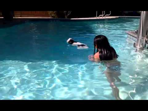 Shih Tzu puppy 1st time swimming