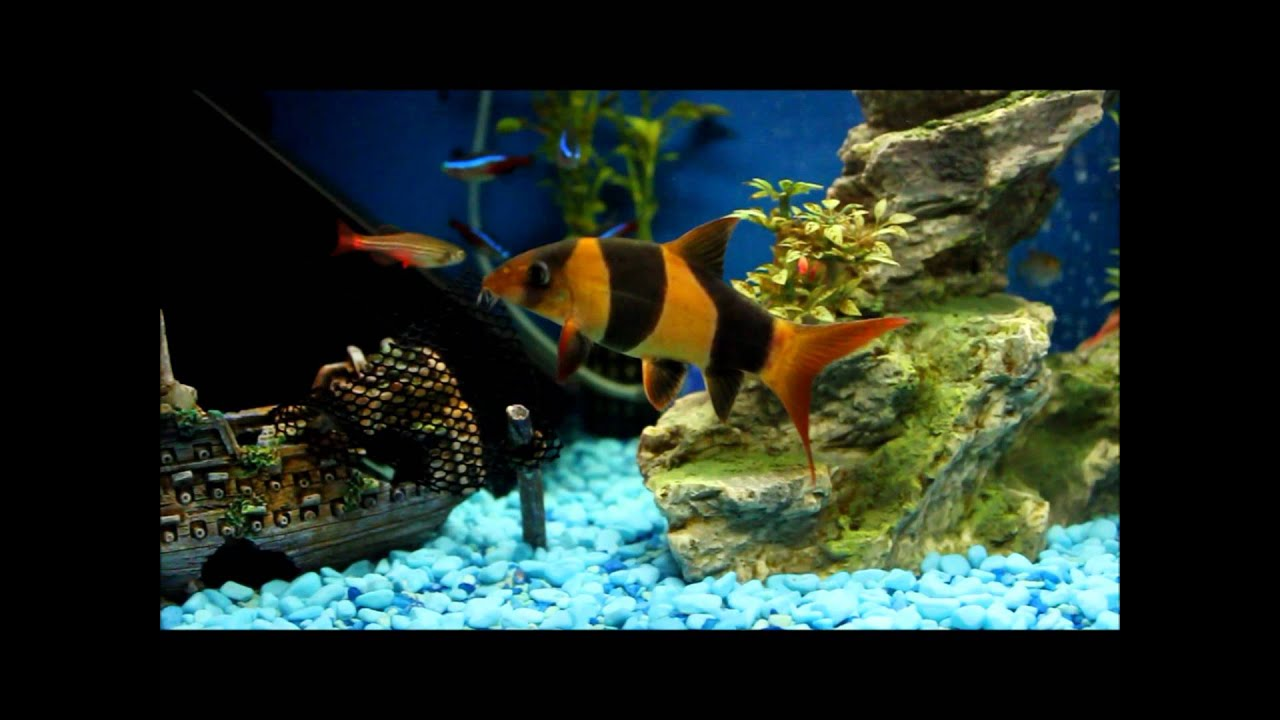 Fish aquarium white spots - How To Detect White Spot Or Ich On All Fish