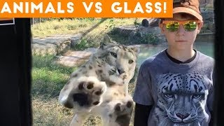 Ultimate Animals Vs Glass Compilation March 2018 | Funny Pet Videos