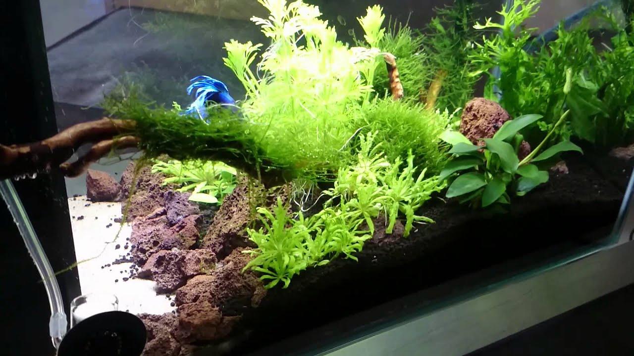 Superfish aquarium fish tank aqua 60 - Superfish Home 25 6 Weeks Old