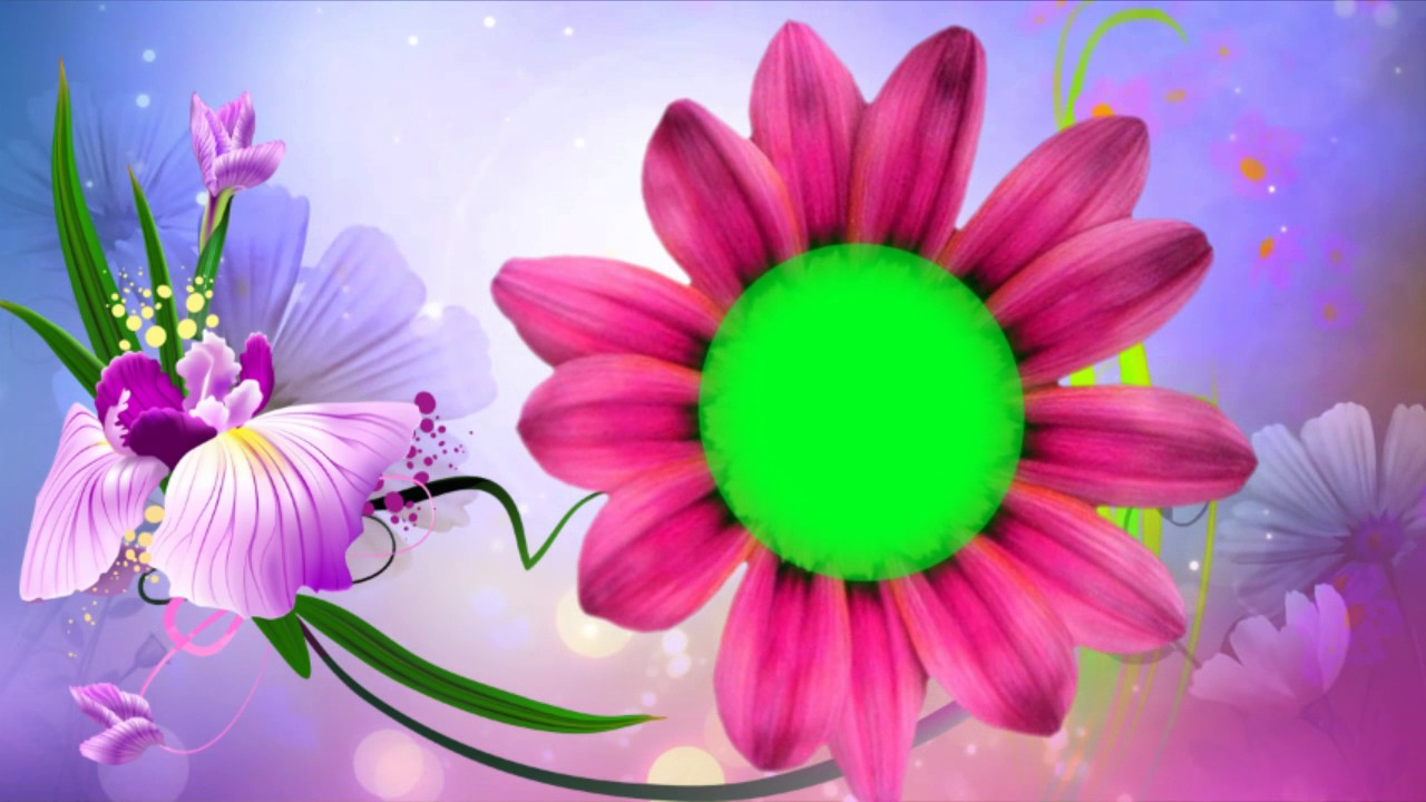 flower animation green screen background effect youtube