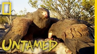 Why Eagles, Falcons and Hawks Are Top Predators: Ep. 3 | Untamed with Filipe DeAndrade