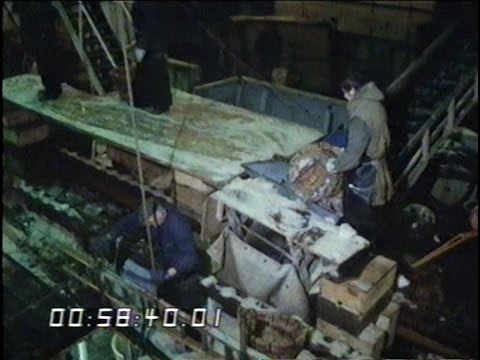 Europe - Fishing Industry - EEC - Common Market - 1981
