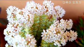 다육이 키우기(팬션 다육이풍경)Succulents