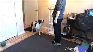 Use of Hand Signals and NonVerbal Communication in Dog Training
