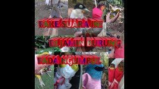 Gambar cover SUARA PIKAT PALING AMPUH UNTUK MEMIKAT BURUNG
