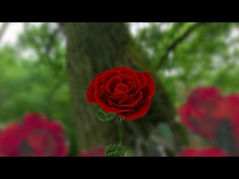 3d Rose Live Wallpaper Free Apps On Google Play,Gifts For Men For Christmas 2016