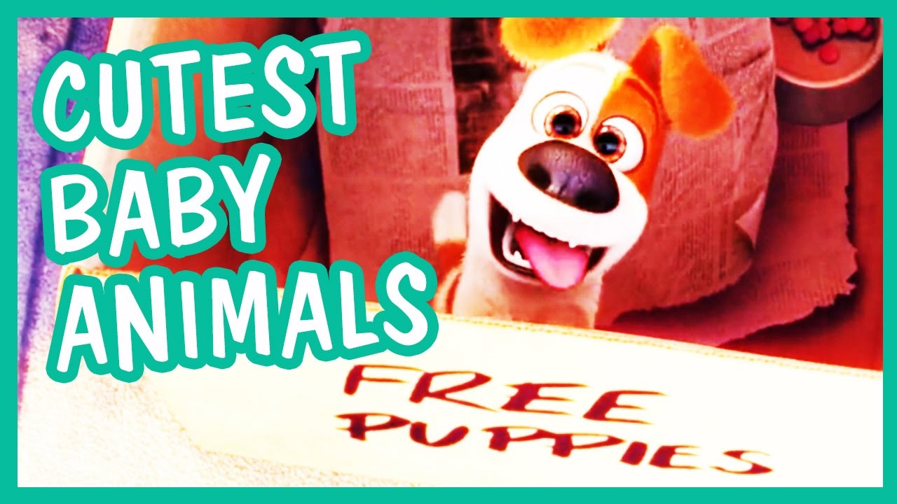 Download Cutest Baby Animals from Animated Family Movies