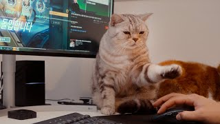 How smart cats don't let owner play computer game