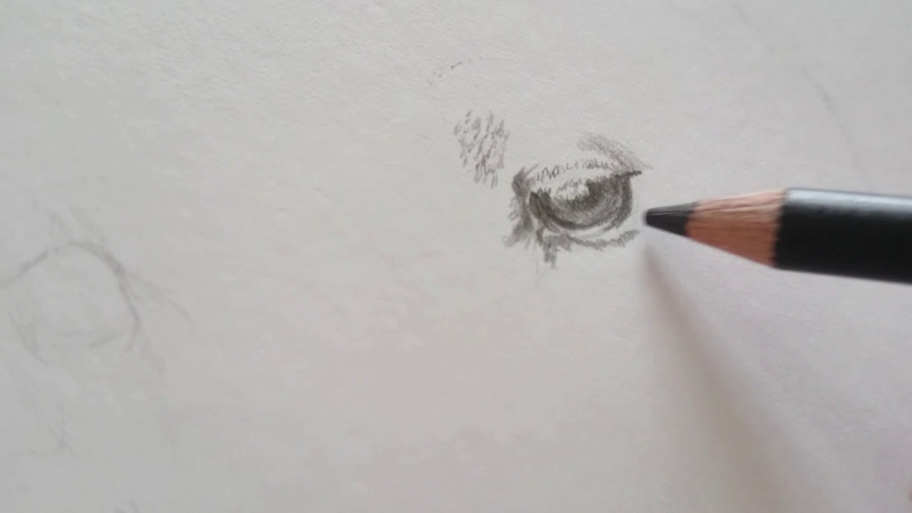 Kresba Bileho Psa Postupove Kratke Video Drawing Pet Portrait