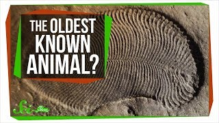 The Oldest Known Animal May Be a Weird, Fleshy Oval | SciShow News