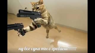 картинки с кошками с надписями неграмотными выпуск пятый(номер пять(5))(по ржать)(ворованные)