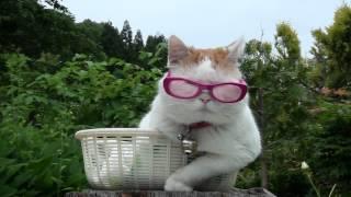 ピンクメガネ Pink glasses