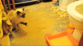 Приучение кошки к новому клозету и месту.Ч-1.(У нас сейчас ремонт в ванной комнате.Недавно делали стену где дверь,снесли угол стены который нам многие..., 2010-10-10T15:17:17.000Z)