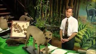 Convergent Evolution speech by Richard Dawkins