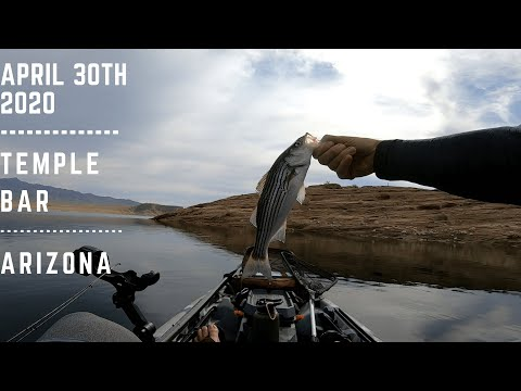 Fish On #3  ||  Temple Bar, AZ  ||  Social Distance Fishing