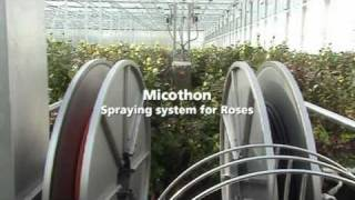 Roses - Micothon Greenhouse Tube/rail Spraying Robot