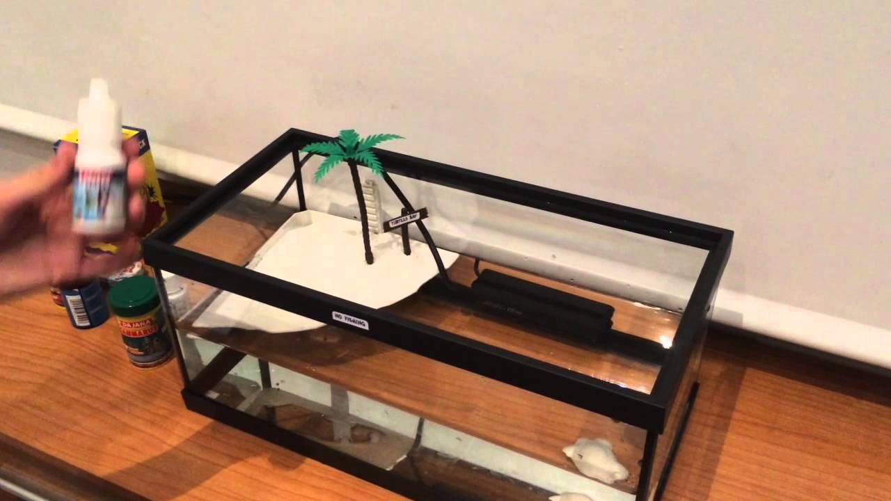 Cuidados b sicos de una tortuga de agua dulce youtube - Cuidados de una hortensia ...