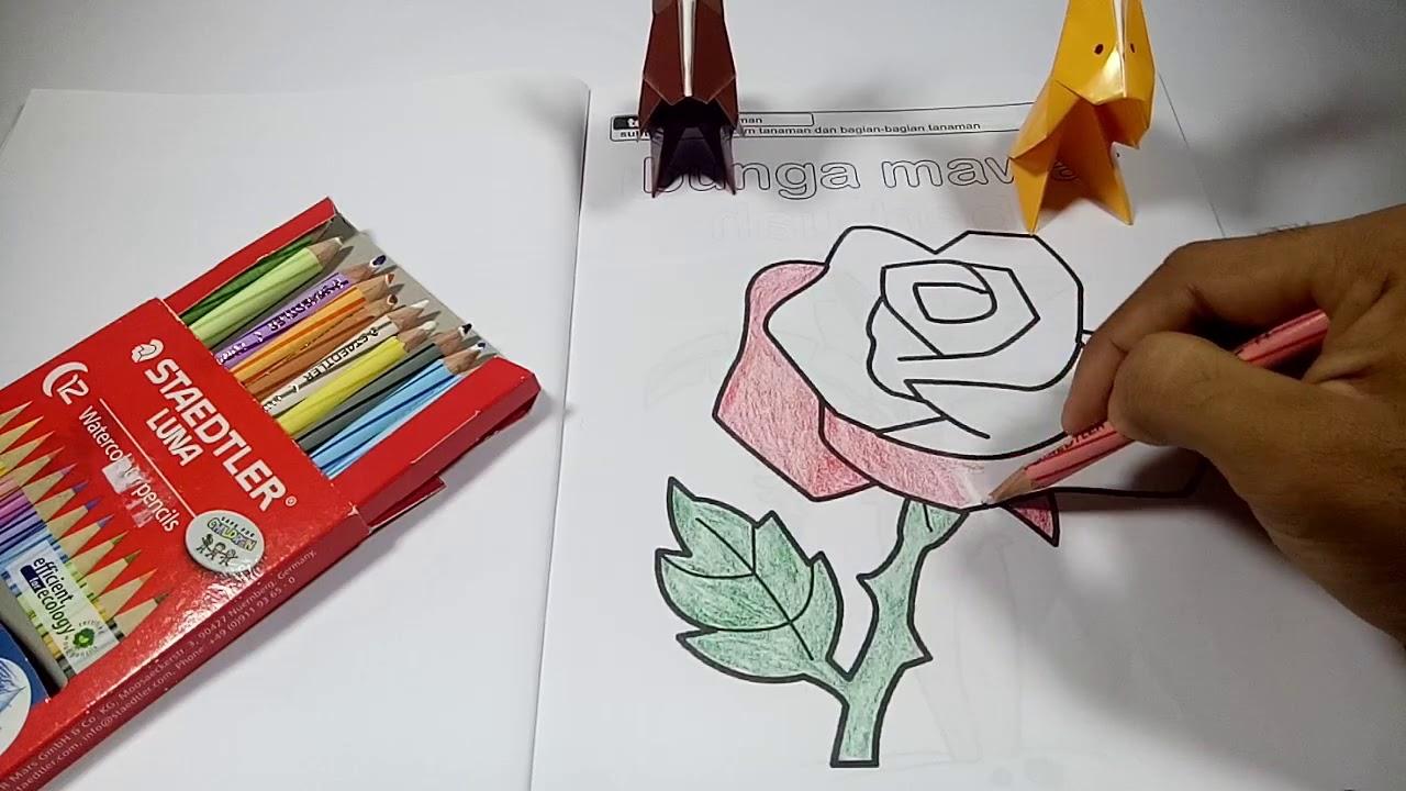 Belajar Menggambar Dan Mewarnai Bunga Mawar Yang Indah Bagi Anak