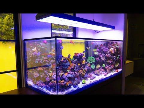 Beverly Hills Reef Tank is Completely Custom: Reef 301