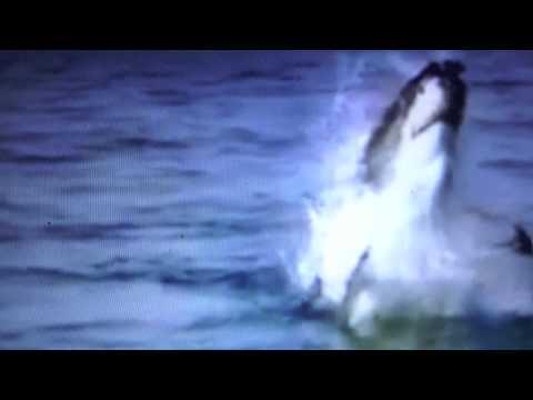 shark attack praslin anse Lazio Seychelles