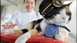Да уж! Нам бы ваши проблемы! В Японии умерла кошка- станционный смотритель Тама Мировые новости