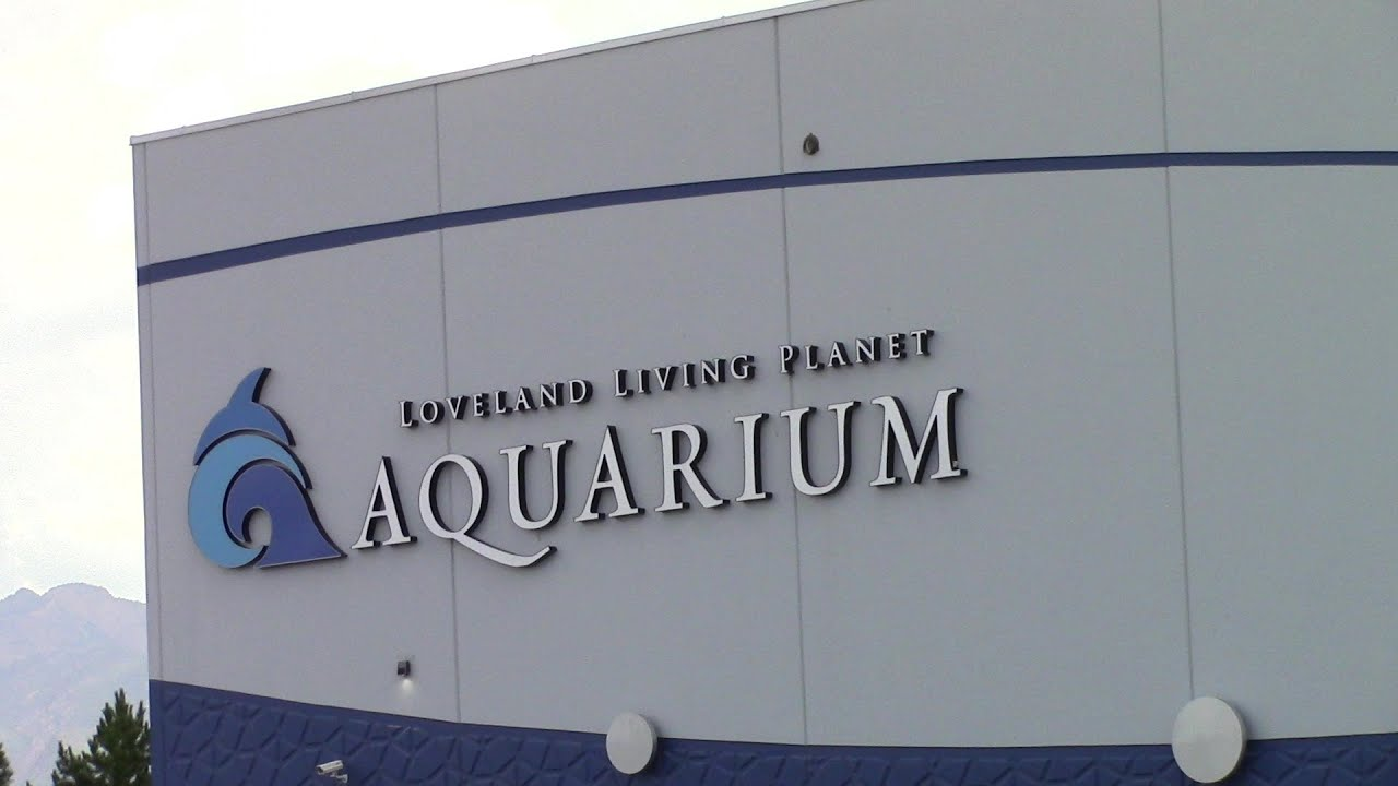 Loveland Living Planet Aquarium - July 2015 - YouTube