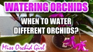 When to water Orchids Part 2 - Different Orchids, different needs
