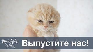 Когда котята начинают шевелиться в животе?