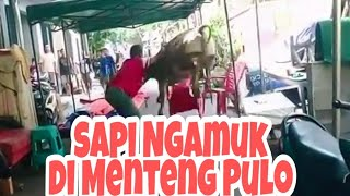 Sapi Ngamuk Di Menteng Pulo (Angry Cow in Menteng Pulo)