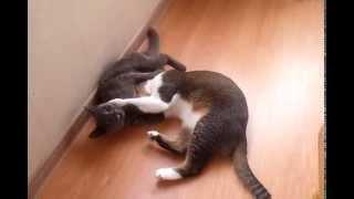Даже коты понимают слово МИР!