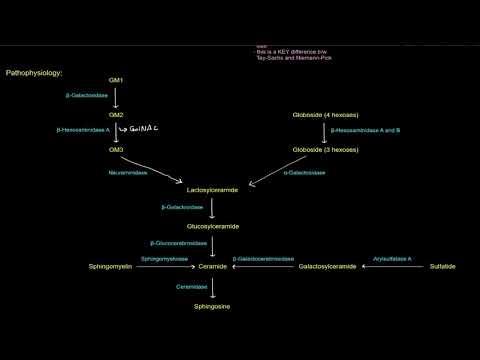 Sphingolipids: Sphingolipidoses - Tay Sachs Disease (a Lysosomal Storage Disease) [free sample]