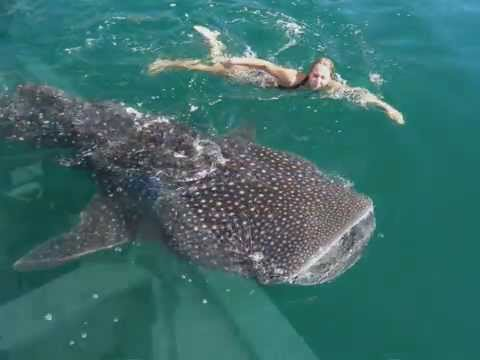 Baja Nature, Adventure Travel & Sea of Cortez Highlights