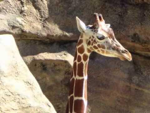 Philadelphia Zoo Slide Show