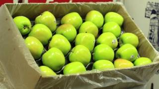 Honeybear Brand Pink Pearl Apples | Shasta Produce