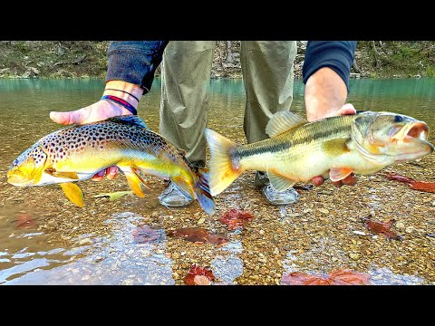 Exploring HIDDEN BACKWOODS RIVERS For RARE Fish!!! --Ozark River Fishing [The Movie]