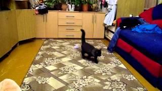 А Ваш котенок так может?!!!
