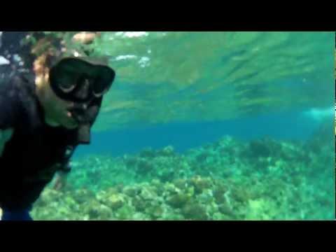 Swimming underwater Hawaii Maui Pacific Ocean shot close to corals at turtle swim